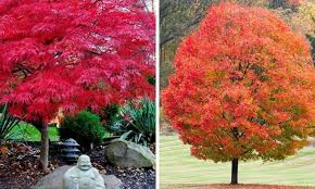 the most amazing 10 trees you can plant in fall