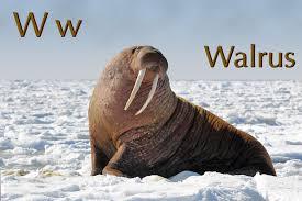 Walrus Meme - nixpages the walrus
