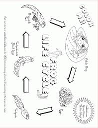 life cycle coloring pages aecost net aecost net
