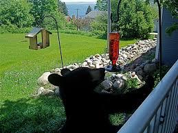 black bear backyard superior spirit