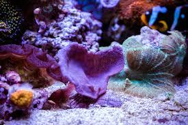 halloween crab jstuver 2016 featured reef aquariums nano reef com community