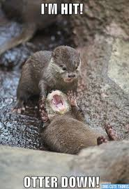Funny Memes Animals - otter down very funny meme animals pinterest otters meme
