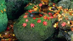 simplywallpapers com japan maple leaf rock garden desktop bakcgrounds