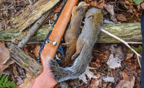 How To Hunt Squirrels In Your Backyard by 4 Key Tactics For Successful Squirrel Hunting Game U0026 Fish