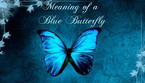 the meaning of a blue butterfly spotting a butterfly spiritual