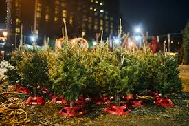 photos of christmas tree vendors in nyc and a poem