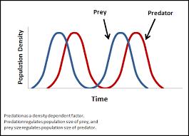 density dependent factors examples u0026 definition video u0026 lesson