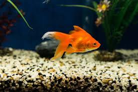fish u2013 monterey fish store