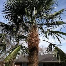 nashville palms nashville tn us 37211