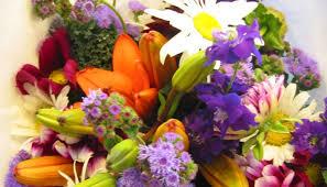 fresh cut flowers beautiful wholesale fresh cut flowers from kenya to azerbaijan