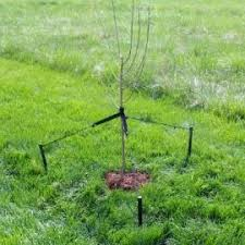 best 25 tree stakes ideas on garden labels eclectic