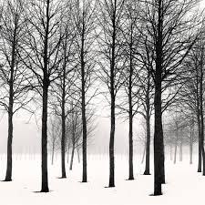 black trees on a foggy winter day in helsinki flickr