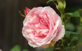 a day at the rome rose garden u2013 simply gardening gardens design