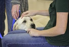 Comfort Golden Boulder U0027s Blue Sky Bridge Uses Facility Dog To Comfort Child