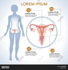 Human Body Anatomy Pics Ovaries Modern Medical Infographics Internal Organs In A Human