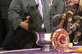 affenpinscher westminster 2015 westminster kennel club dog show day 2 in photos l a unleashed