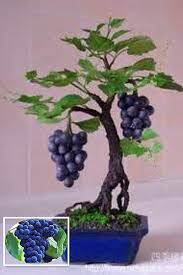 Small Indoor Trees by Online Get Cheap Small Fruit Plants To Grow Indoors Aliexpress