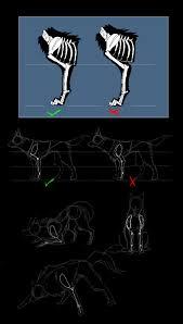 Dog Anatomy Front Leg Canine Anatomy Front Legs By Ash Dragon Wolf On Deviantart