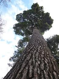 big tree picture of jardin botanico valencia tripadvisor