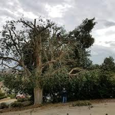 discount tree service 24 photos tree services 3410 la