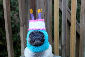 happy happy birthday cake dog hat made to order