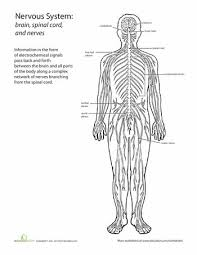 50 best human body images on pinterest human body science