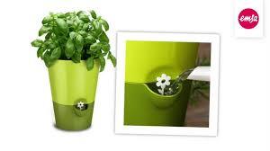 kräutertopf küche emsa fresh herbs kräutertopf küche