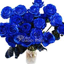 buy roses buy blue tinted roses at wholesale pricing