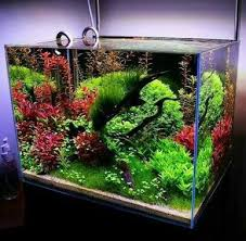 Aquascaping Techniques Aquascaping Twitter Search