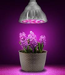 grow lights for indoor herb garden amazon com hoont led grow light indoor plant flowers and herb