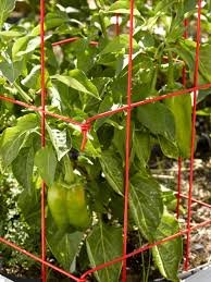 pepper cages and eggplant cages gardeners com