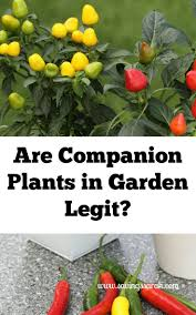 1254 best companion planting images on pinterest companion