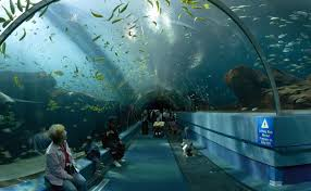 fish tank largest freshwater aquarium in the usa united states