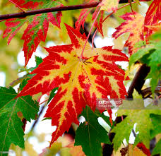 foliage scenes pictures getty images