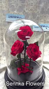 forever roses wholesale forever roses 3 pcs pink rose in glass preserved natural