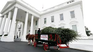 welcomes white house tree