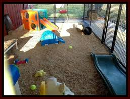 Dog Playground Equipment Backyard by This Is From A Doggy Daycare But Some Great Ideas To Make Your