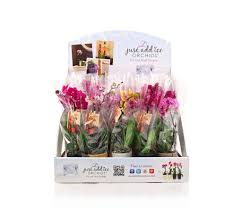 flowers in bulk buy mini orchids in bulk and online just add