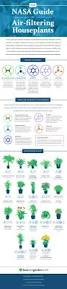 Best Plants For Desk by This Graphic Shows The Best Air Cleaning Plants According To Nasa