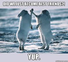 Did We Just Become Best Friends Meme - did we just become best friends yup bunny bros quickmeme