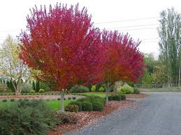 top ten trees how to plant them
