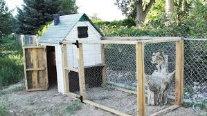 Building Backyard Chicken Coop How To Build A Pallet Chicken Coop 20 Diy Plans Guide Patterns