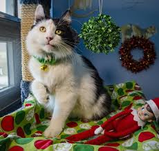 adopt shelter dogs cats 12 strays of christmas the kansas city