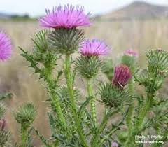 Four Seasons Landscaping by Noxious Weed Identification Meeting Four Seasons Landscaping And