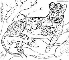 leopard coloring pages coloring pages to download and print
