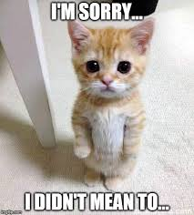 Sorry Memes - cute cat meme i m sorry i didn t mean to image tagged in
