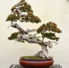 Cool Tree by 10 Coolest Looking Bonsai Trees