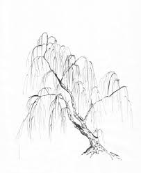 dead tree weeping willow pencil and in color dead