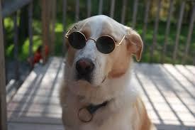 Put On Sunglasses Meme - pic 2 when im bored i like to put sunglasses on my dogs meme guy