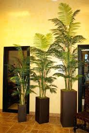 trees in pots best 25 trees in pots ideas on potted